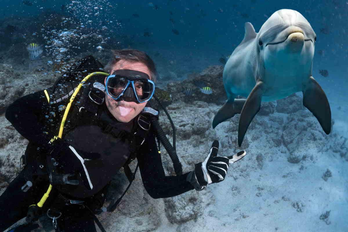 golfinho-sub