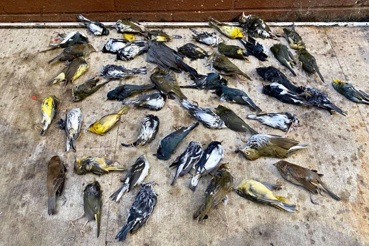 pássaros-morte-Filadélfia