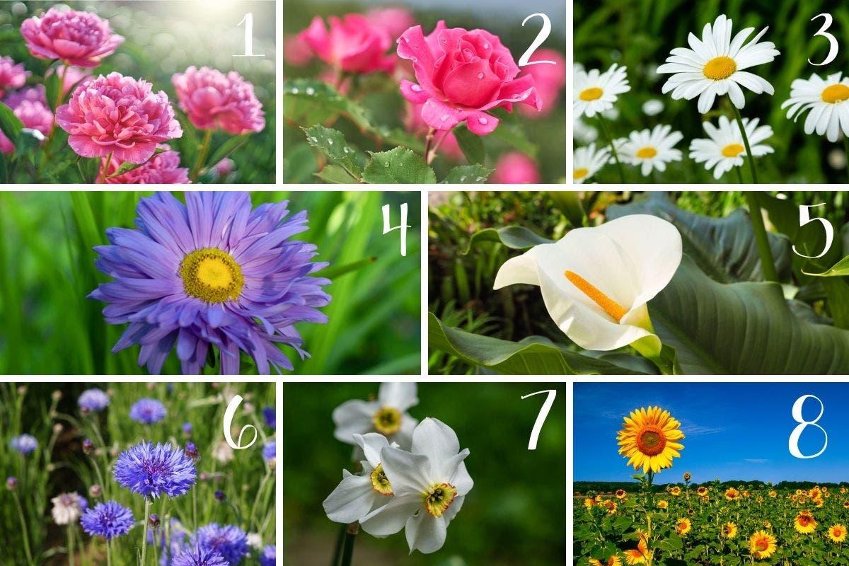 teste-flores