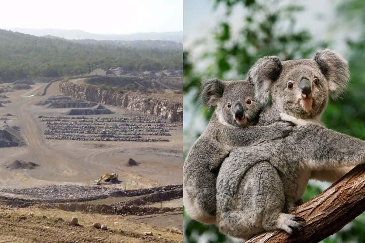 cava-koala
