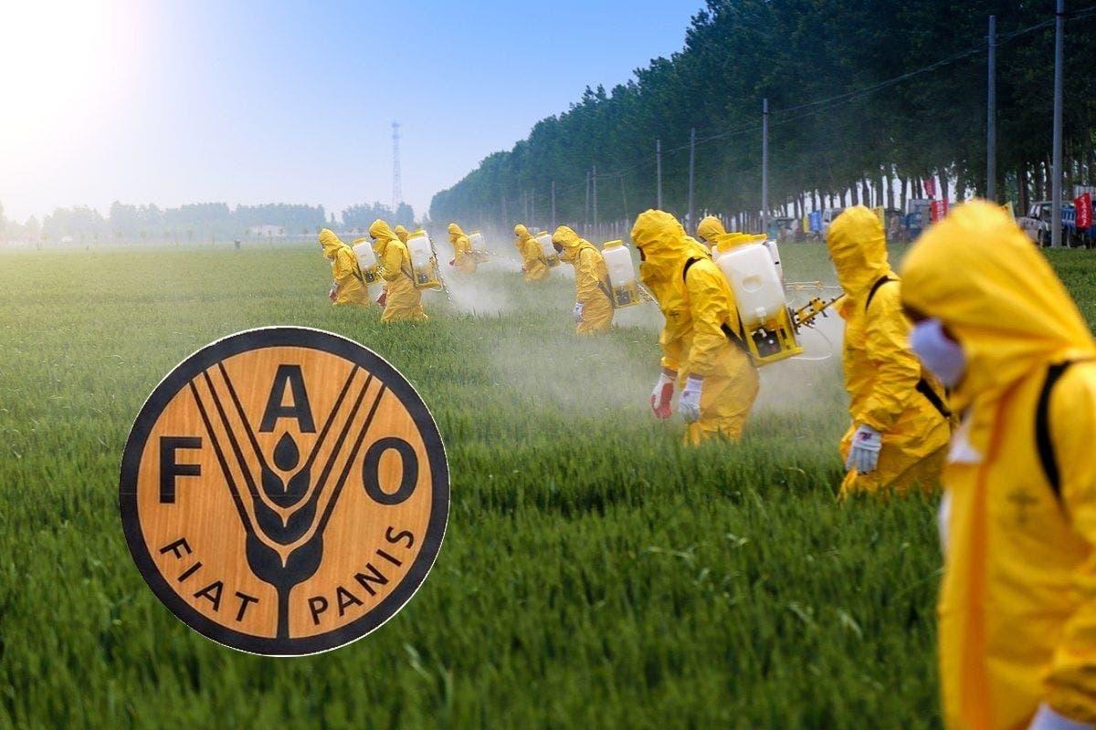 fao-pesticidas