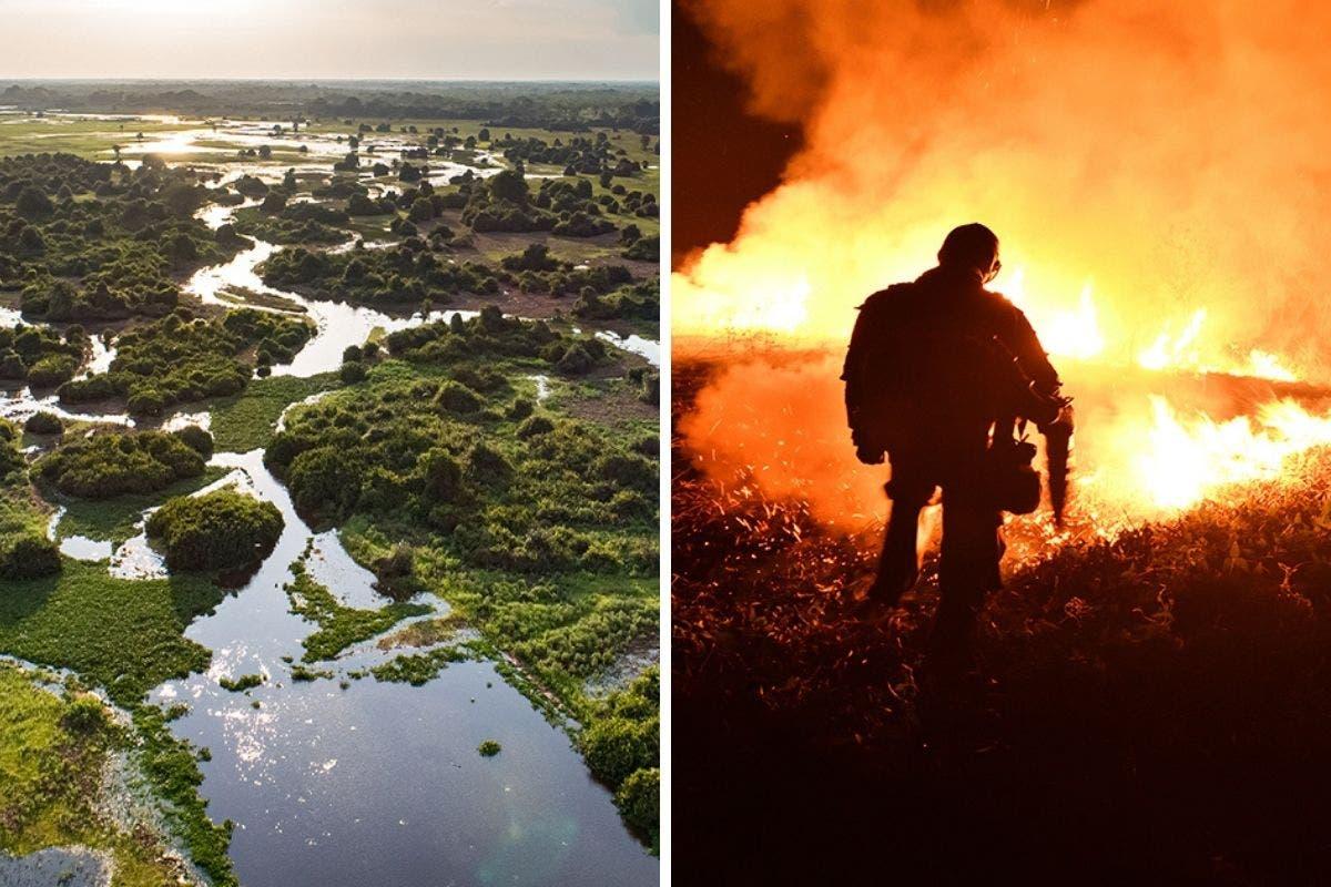pantanal-incendios