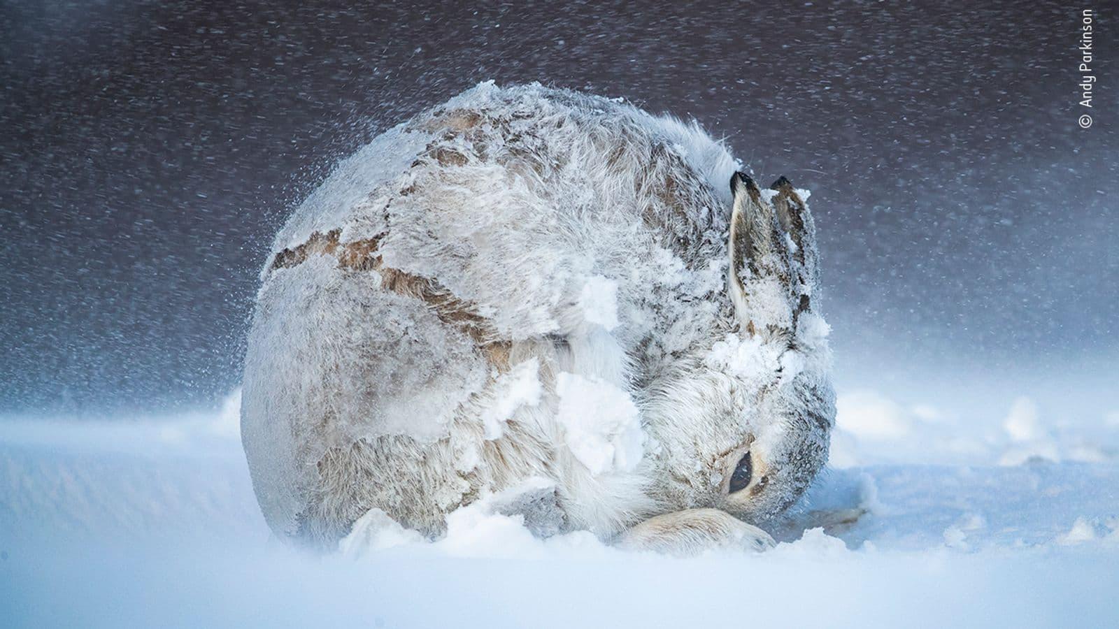 Hare-Ball-di-Andy-Parkinson-min