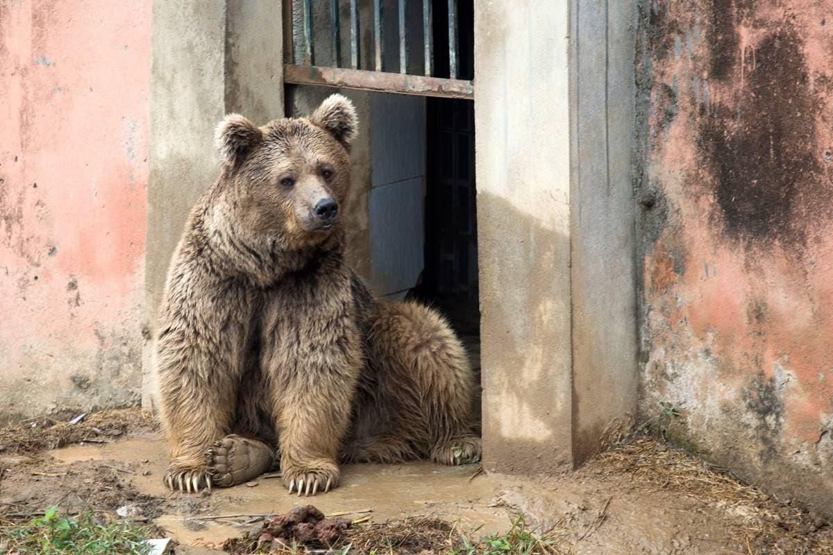 zoo-pakistan