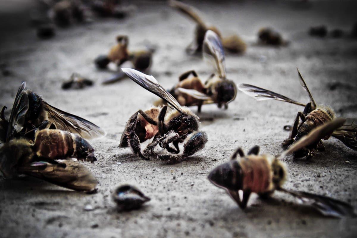 Apocalipse insetos