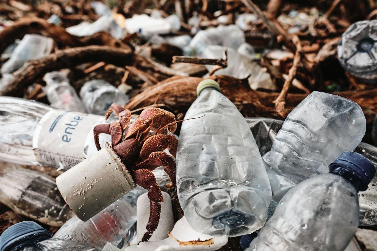 caranguejo-plastico