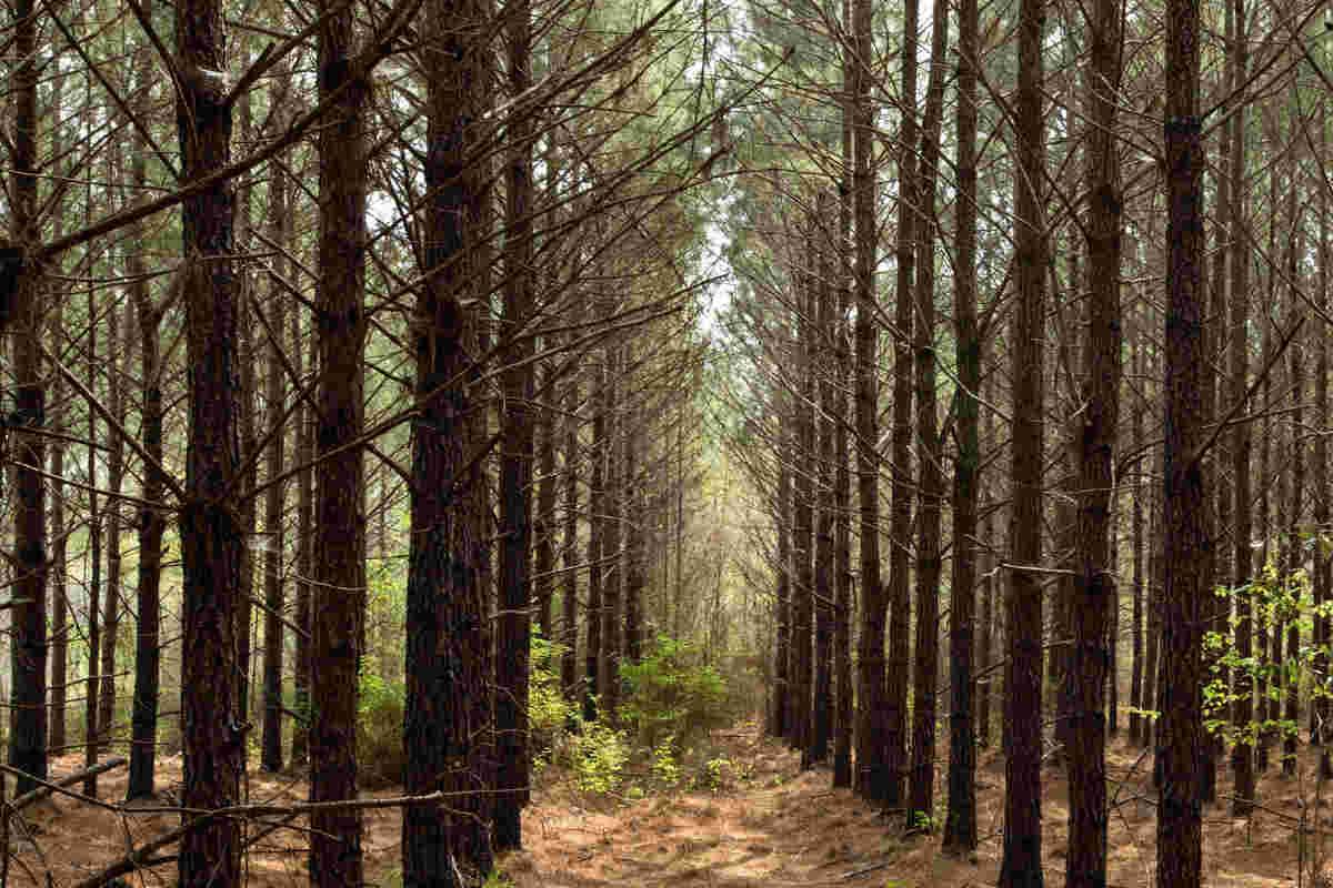 ikea-florestas