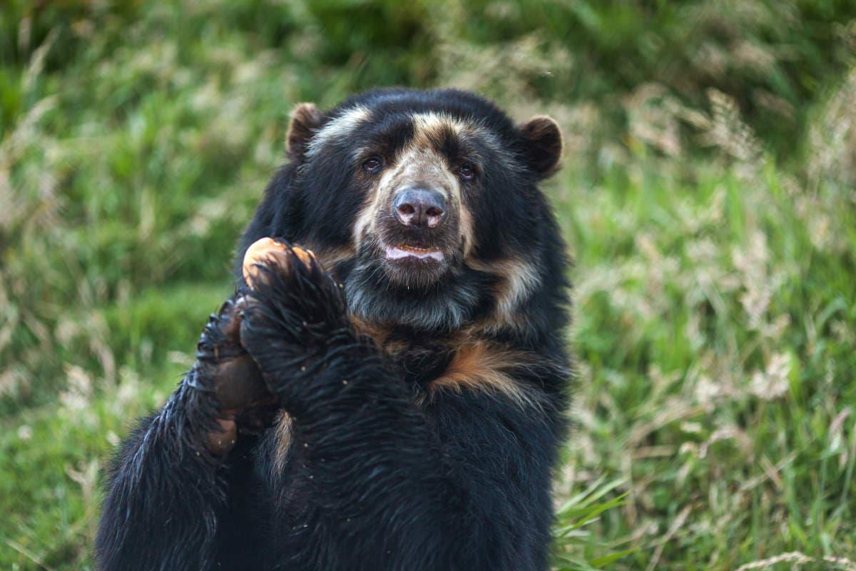 urso-colombia