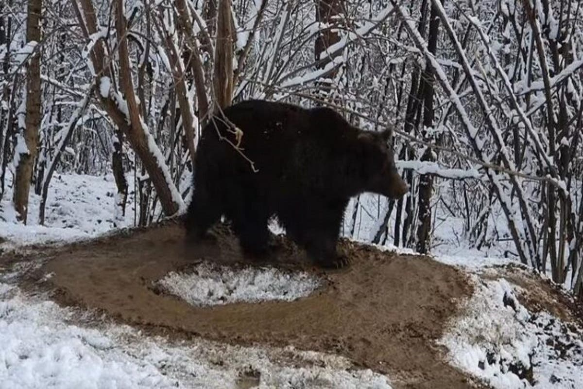 urso-romania