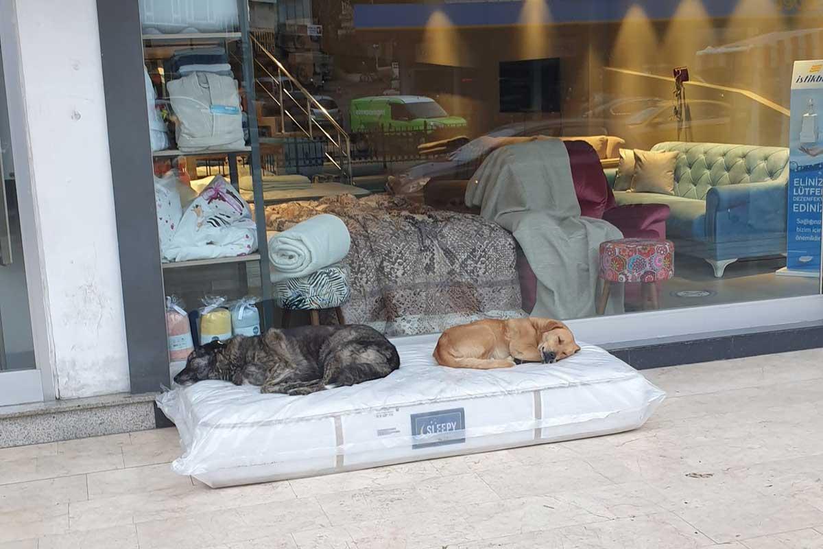 colcao-cachorro