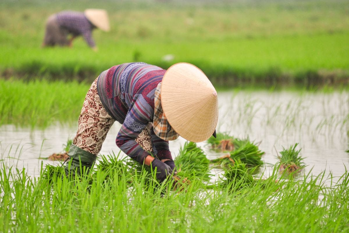 fukushima-produtores