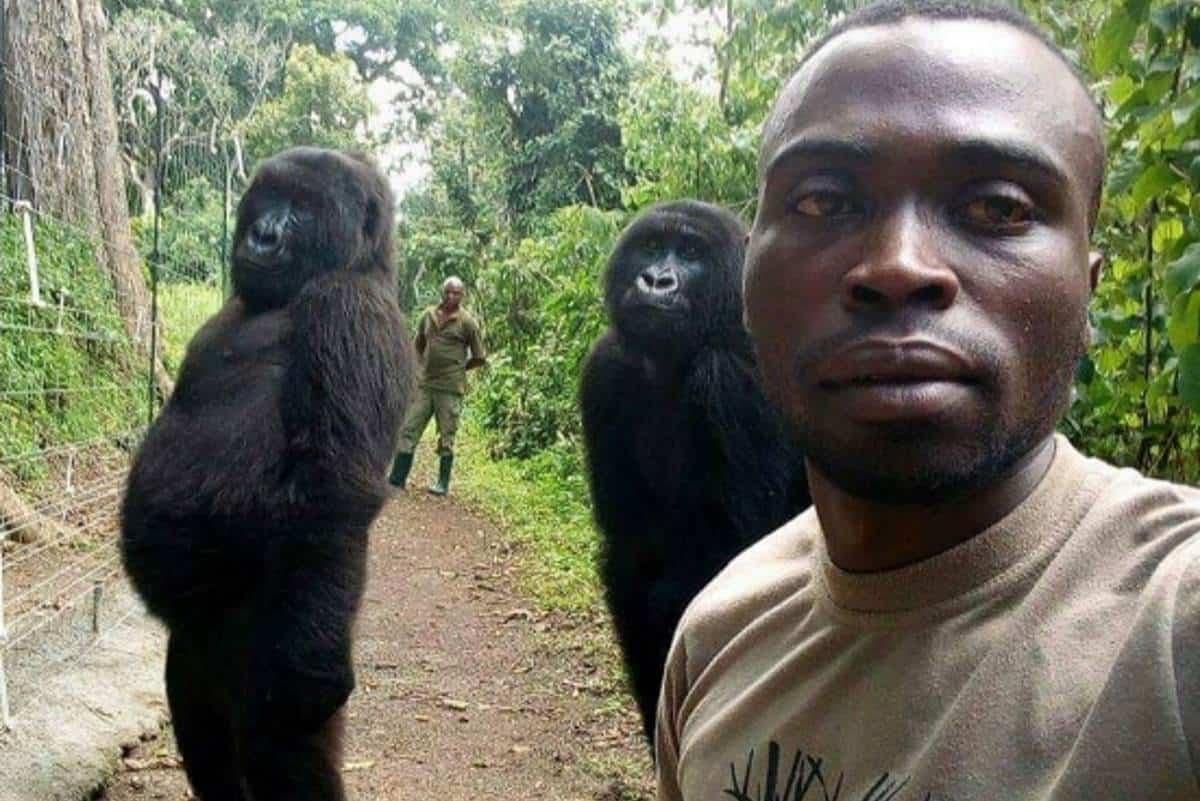 gorilla-parc