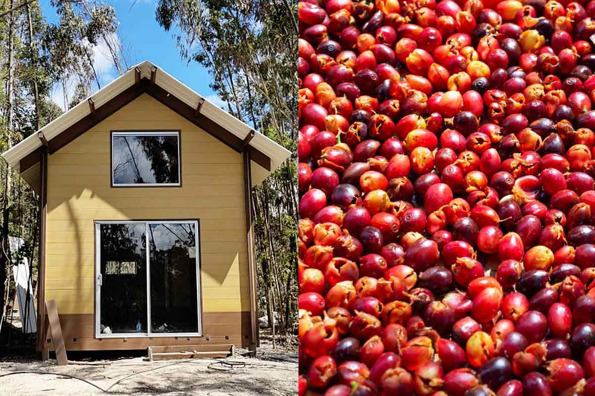 Woodpecker-casa