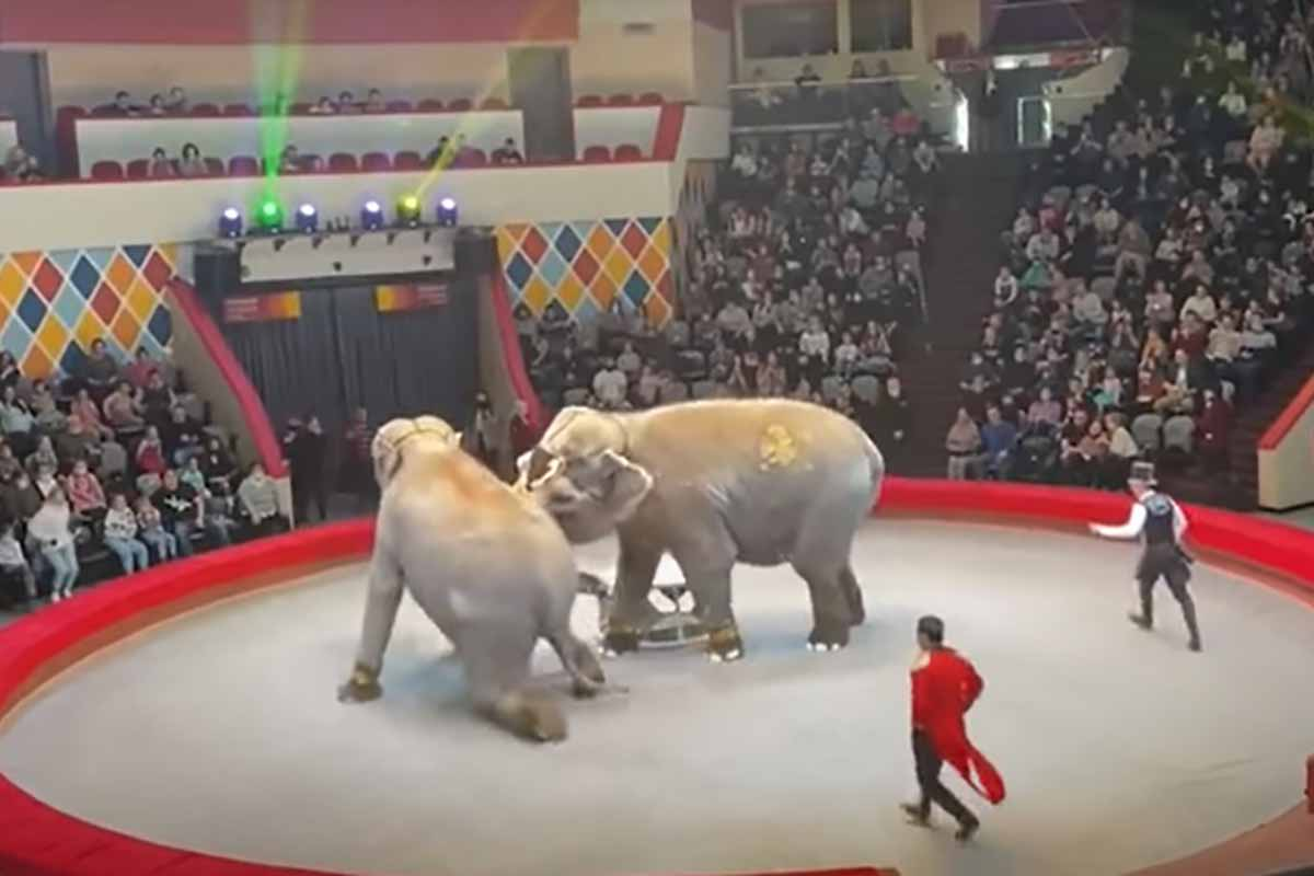 elefantes-circo-russia