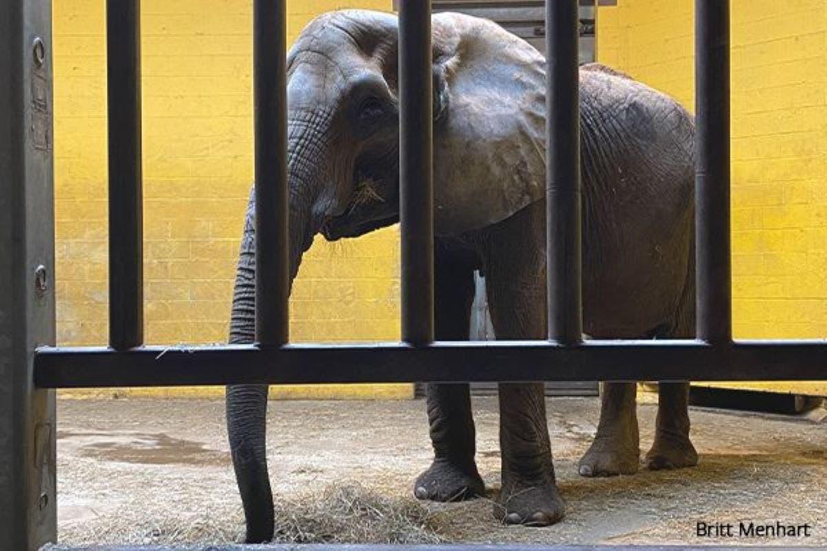 zoologico-elefantes