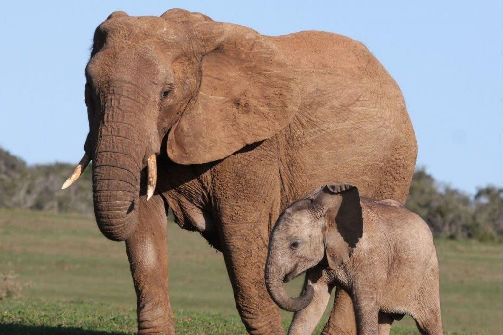 elefantes-zimbawue