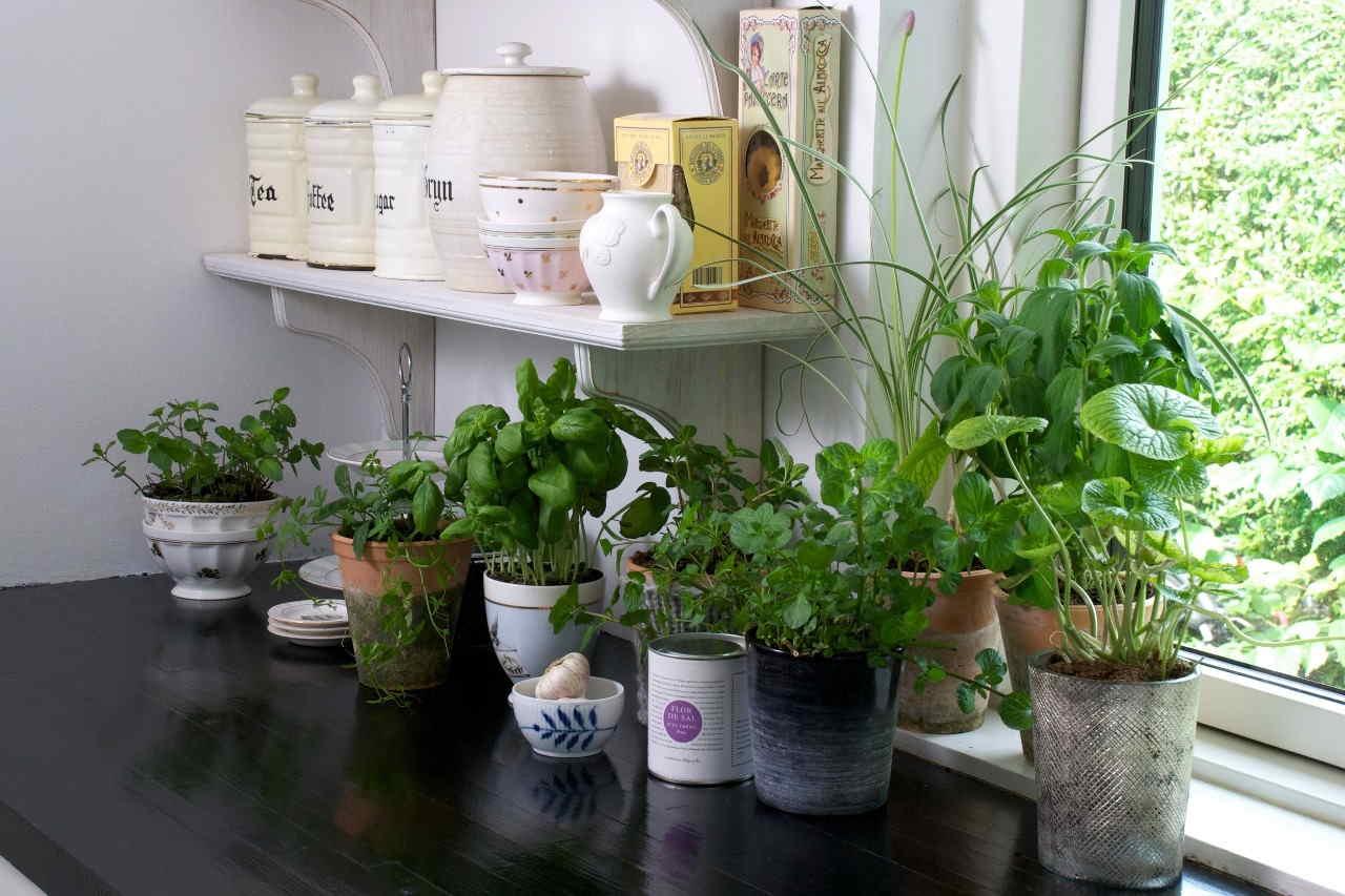 ervas-aromaticas-cozinha