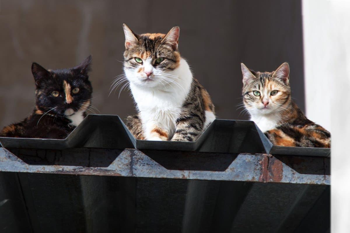 gatos viados