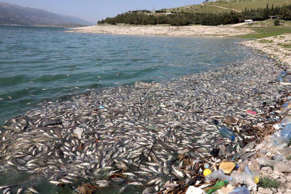 peixes mortos libano