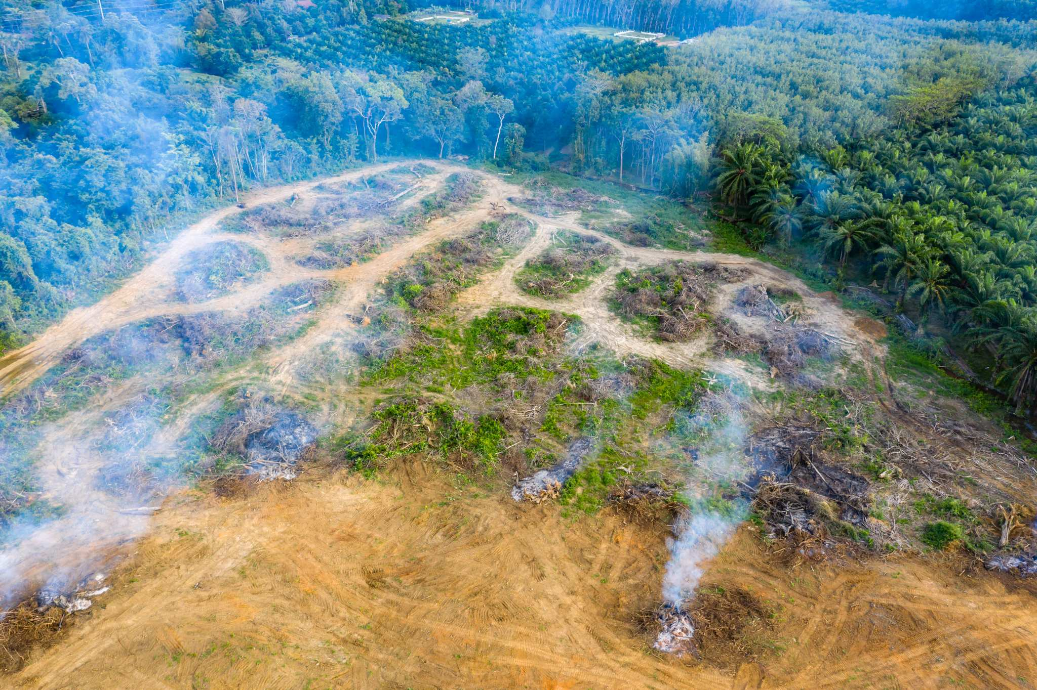 amazzonia secca