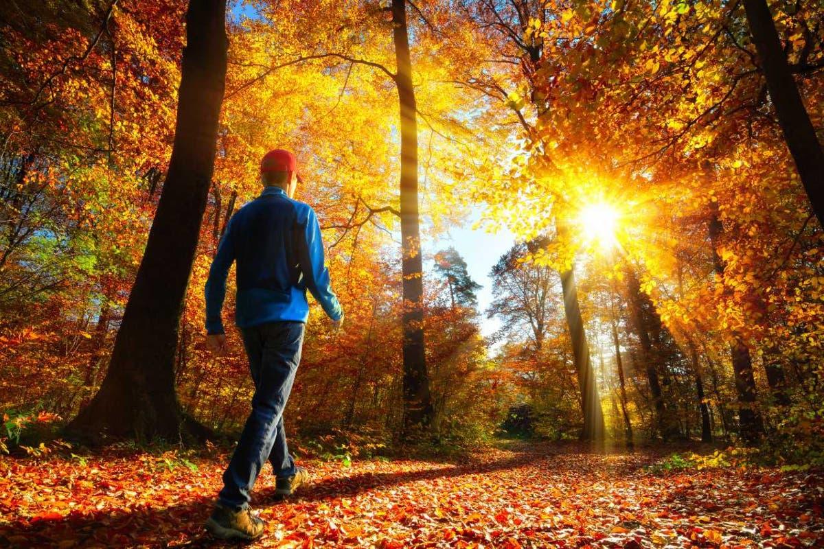 benefici-meditazione-camminata