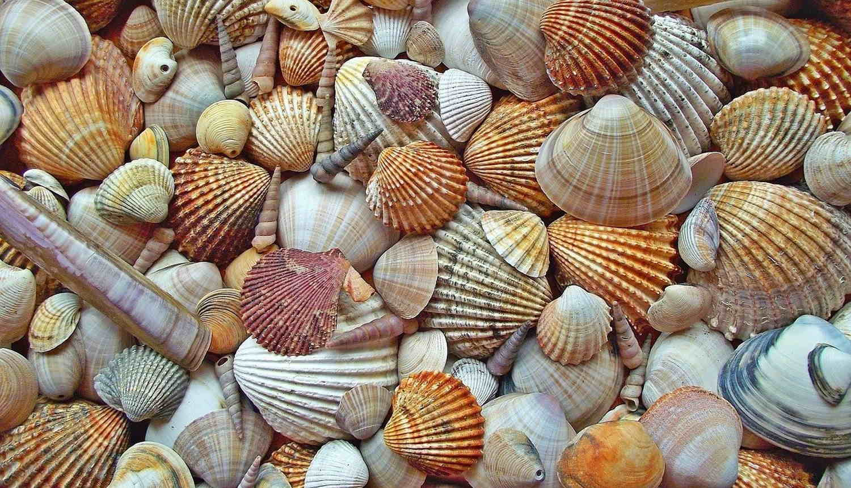 conchinhas praia