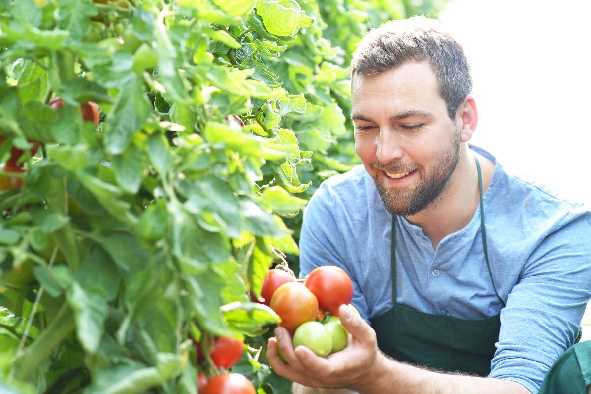 tomate spray