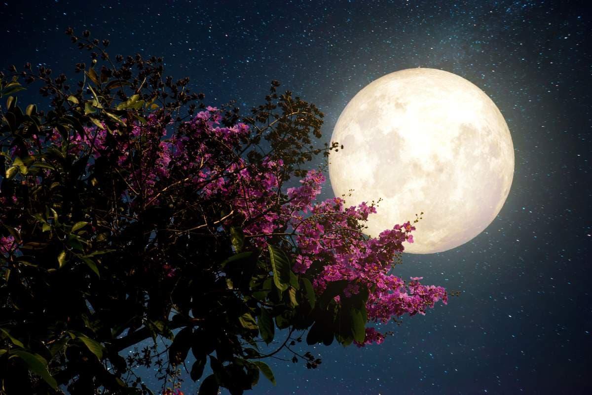 fases de lua