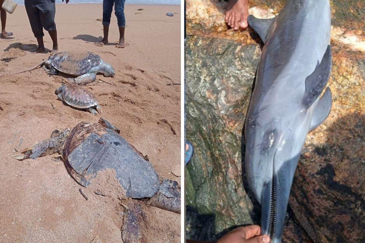 massacre-animais-srilanka