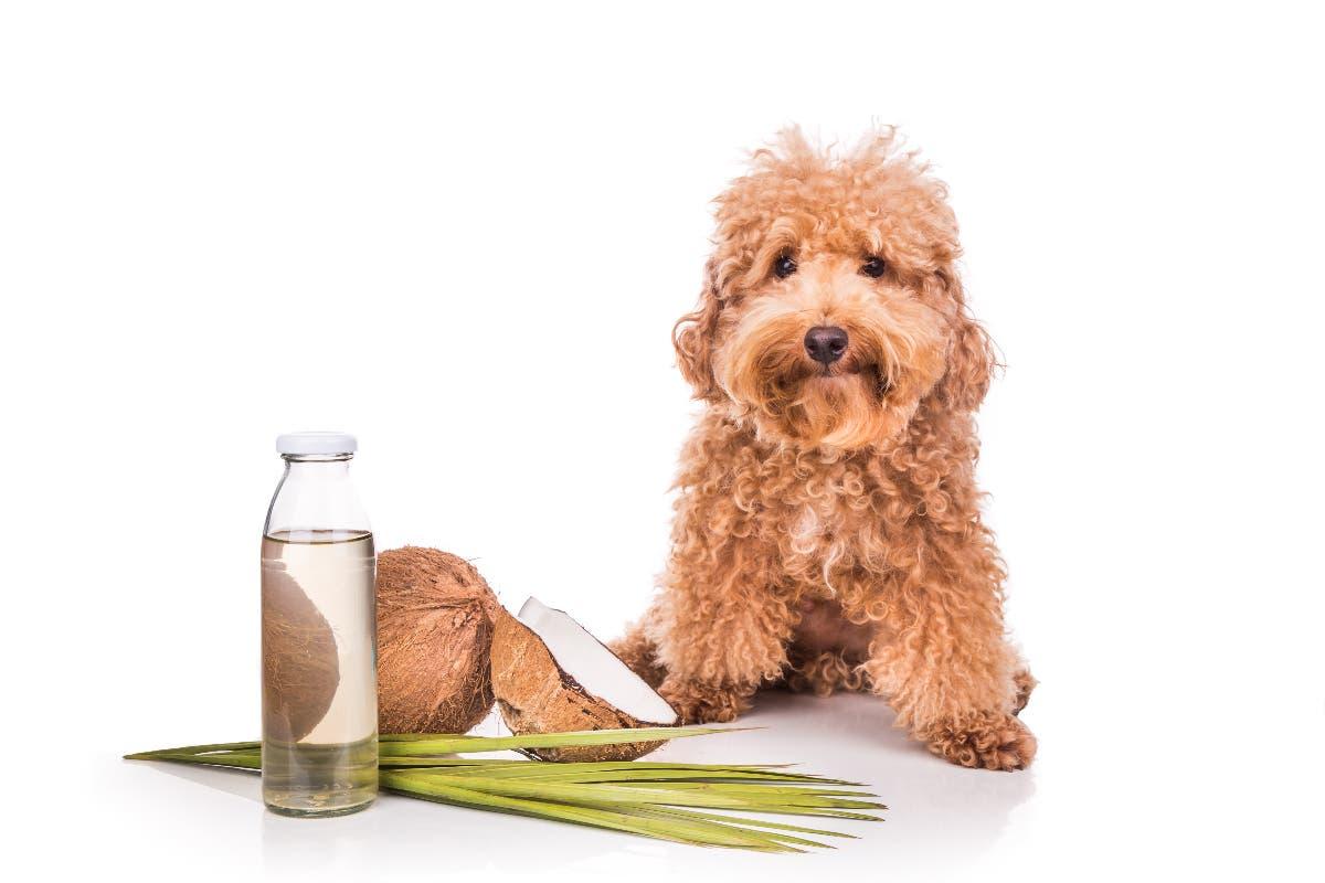 oleo-coco-cachorro