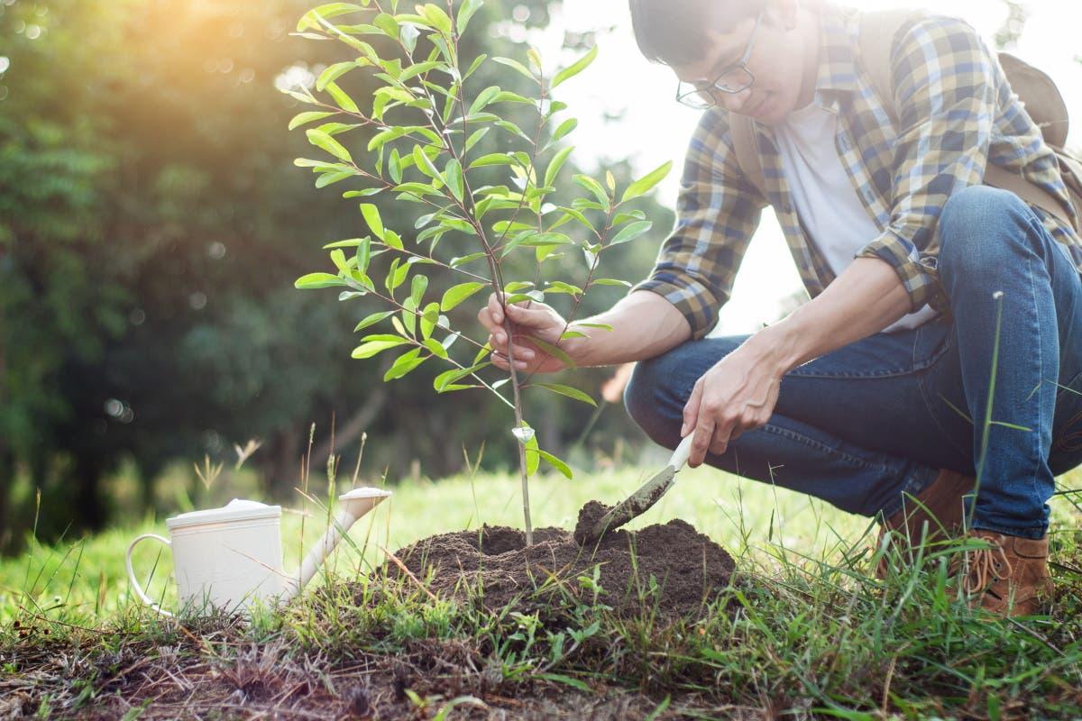plantar-arvores