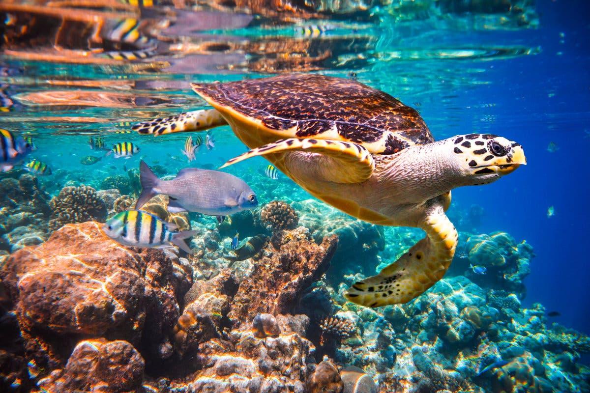 tartaruga-do-mar