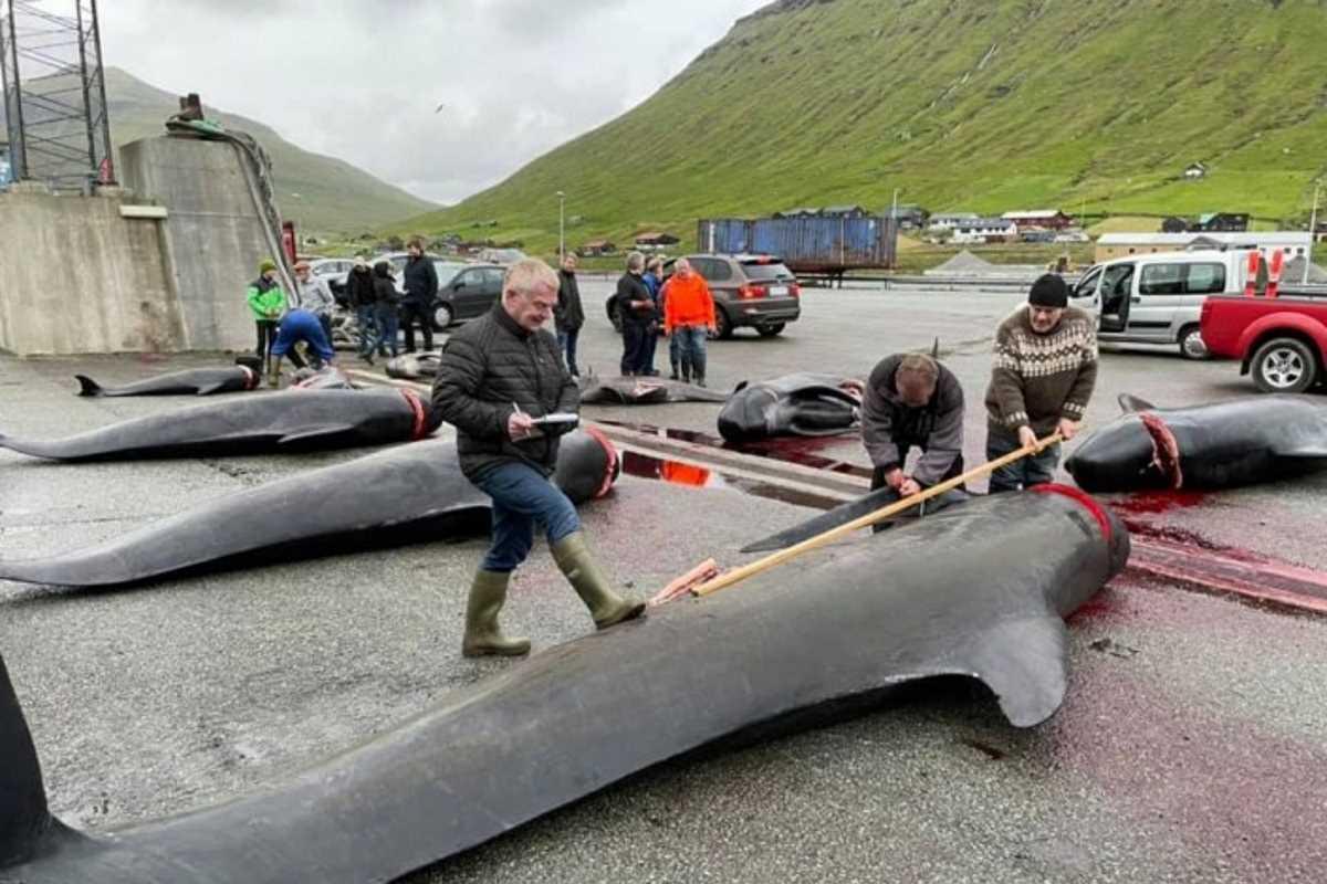 balene isole Faroe
