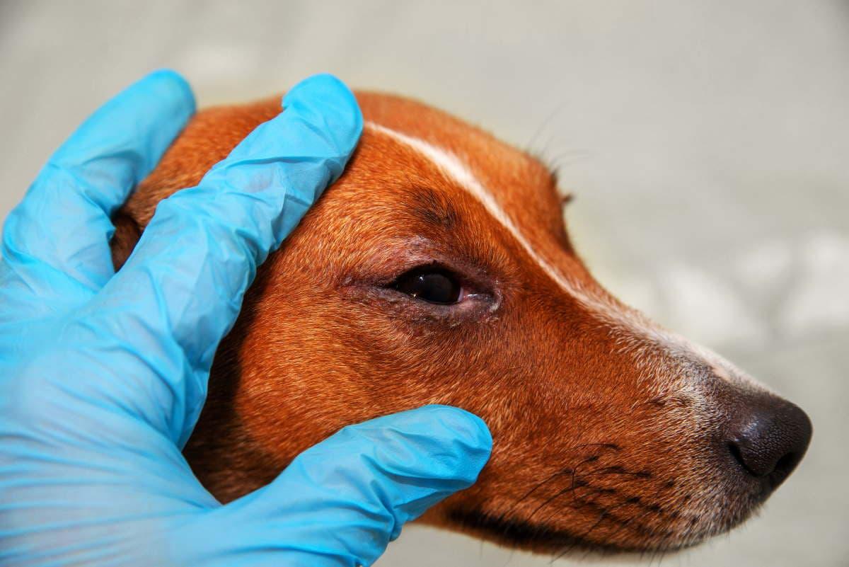 occhi rossi cane