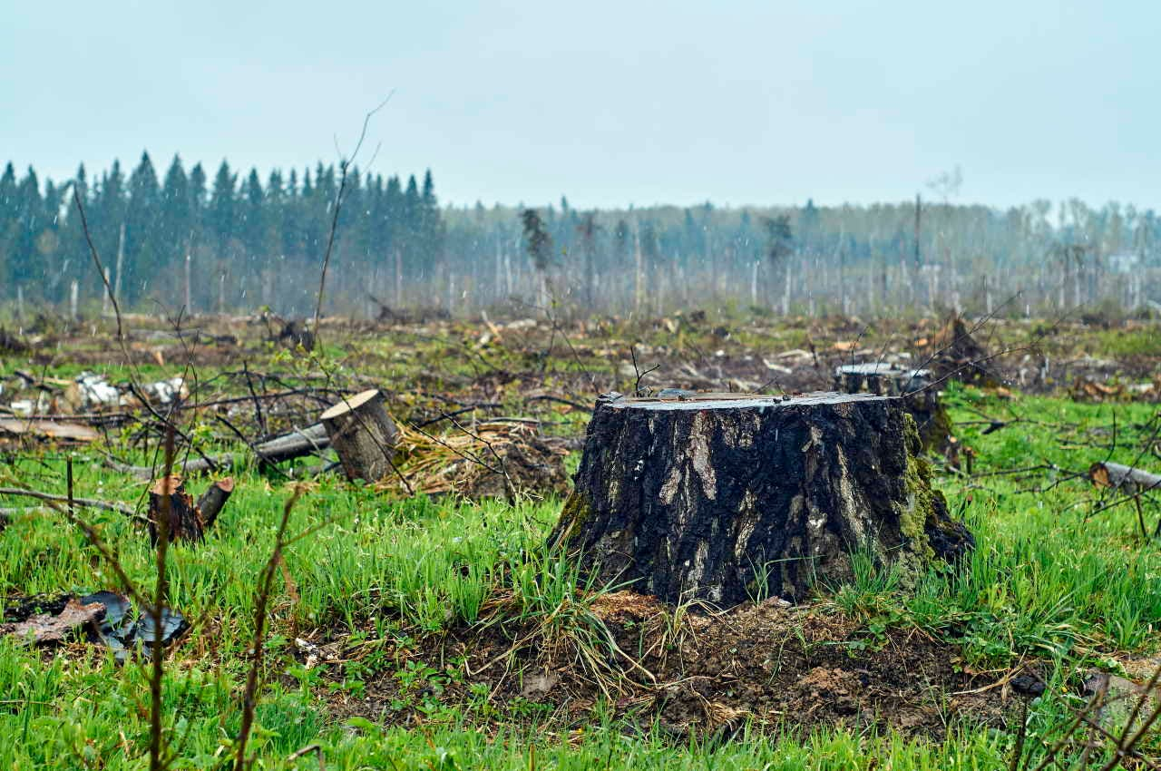 deforestazione pandemie coronavirus zone a rischio