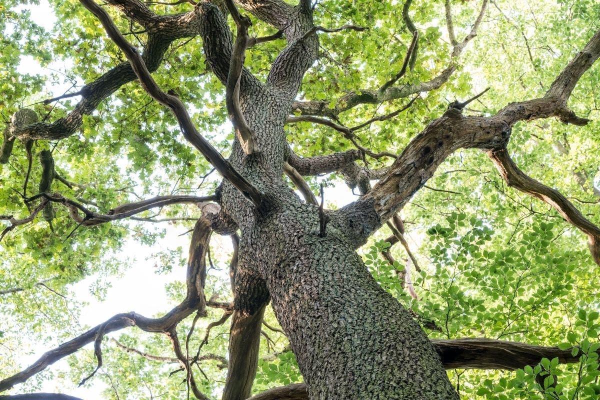 estinzione-alberi-selvatici