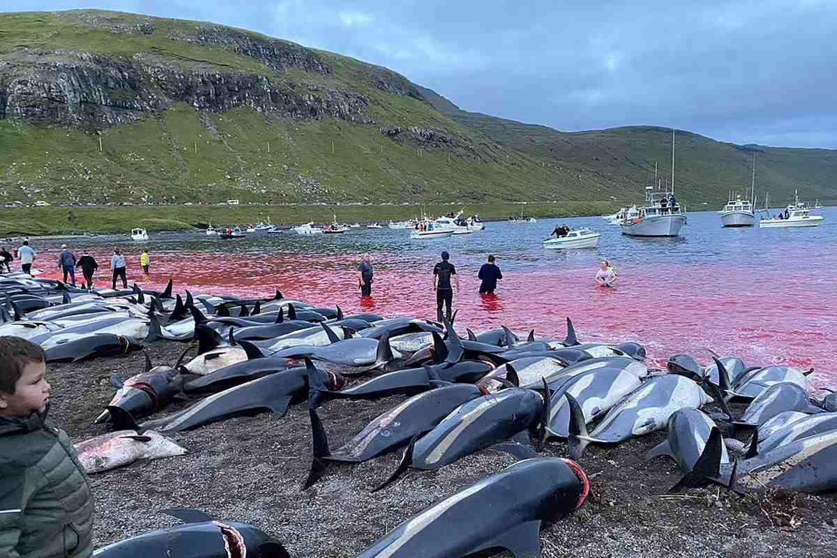 massacre golfinhos