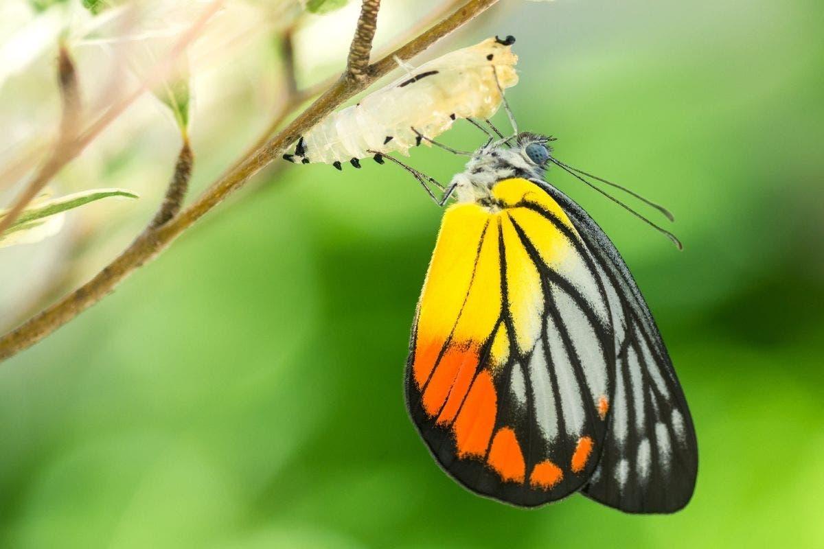 non tutti i bruchi diventano farfalle studio