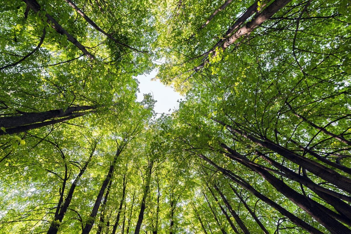 tree_species