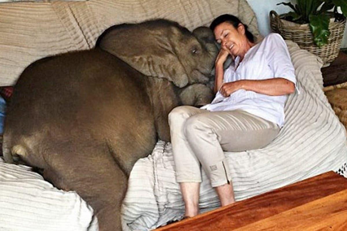 elefante melhor amigo